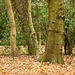 Eastham Woods