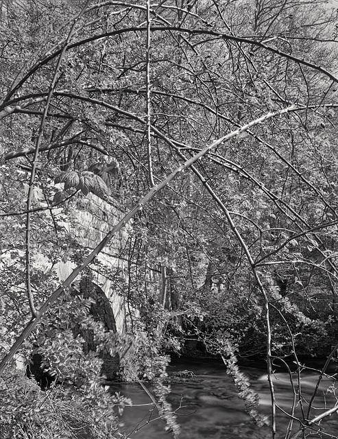 Derbyshire Wye - Fillyford Bridge - Briar