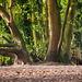 Eastham woods5