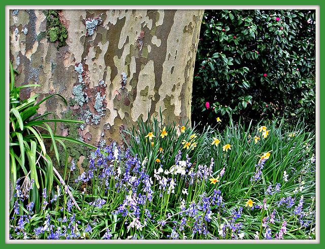 Quiet Corner of Spring Flowers