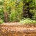 Eastham woods32