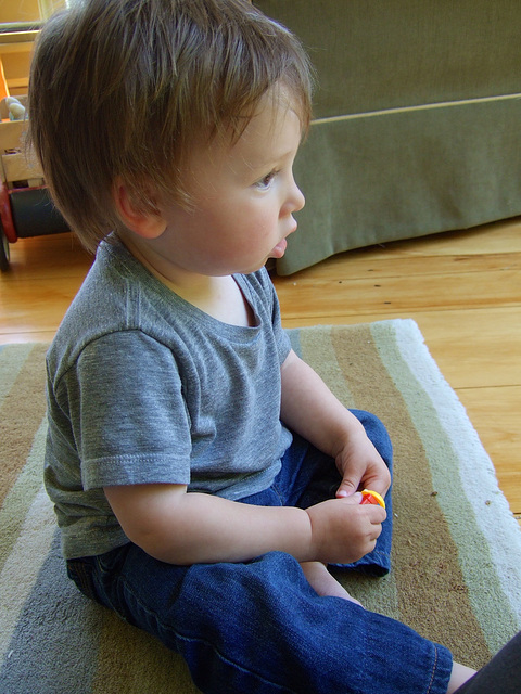 Shepherd, 18 months #3