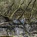 20200321 6978CPw [D~LIP] Waldtümpel, Bad Salzuflen