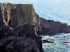 Cabo Sardão- Birdwatching point