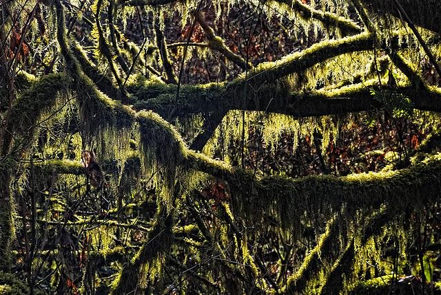 Westcoast Rainforest