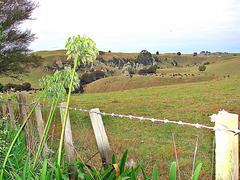 Up Lake Arapuni Road, South Waikato