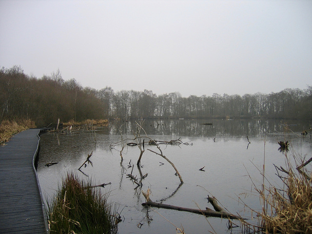 Fradley Pool Nature Reserve, formally Fradley Reservoir, on a cold February day 2006