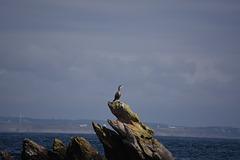 excursion en mer d Iroise et île de molène