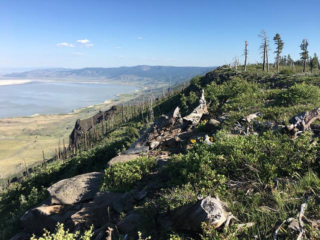 Winter Ridge (or Rim)