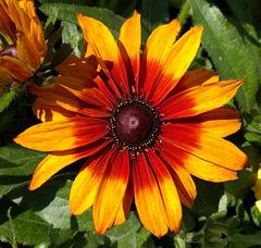 Un beau soleil pour mon amie Stefani !!! A beautiful sun for my friend Stefani!