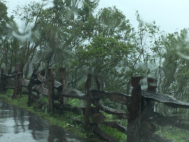 Impressionen bei Regen