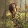Au détour d'un chemin de bois...
