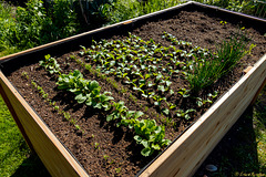 Raised Bed (PiP)