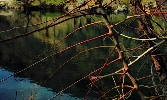 River willow