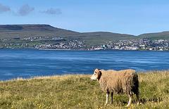 Sheep Islands