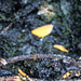 20160512 1412VRMw [D~LIP] Pilz, Bad Salzuflen