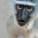 South Africa Sodwana Bay IGP5446