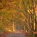 Autumn Scenery in Evening Sun...