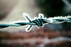 The Frosted Knot