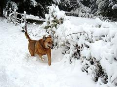 DANA: Youpi ! La neige ! [ON EXPLORE]