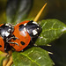 Birds do it, bees do it, ladybirds among the leaves do it......
