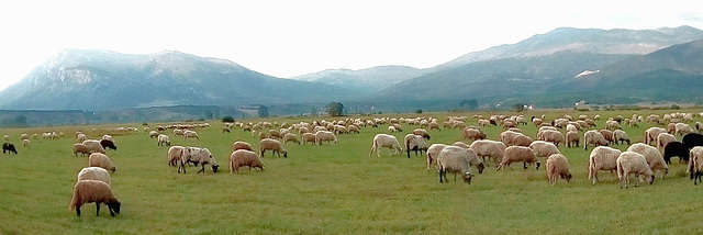 On the field under Dinara mountain