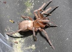 SpiderDC IMG 1182