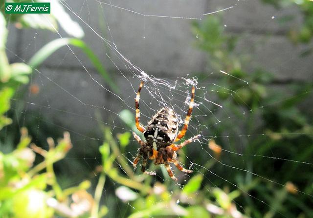 01 spider