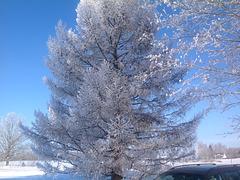 Frosta mateno