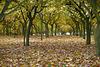Hazelnut autumn trees