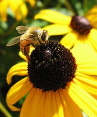 Is It Honey Yet?