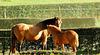 New Horse Area