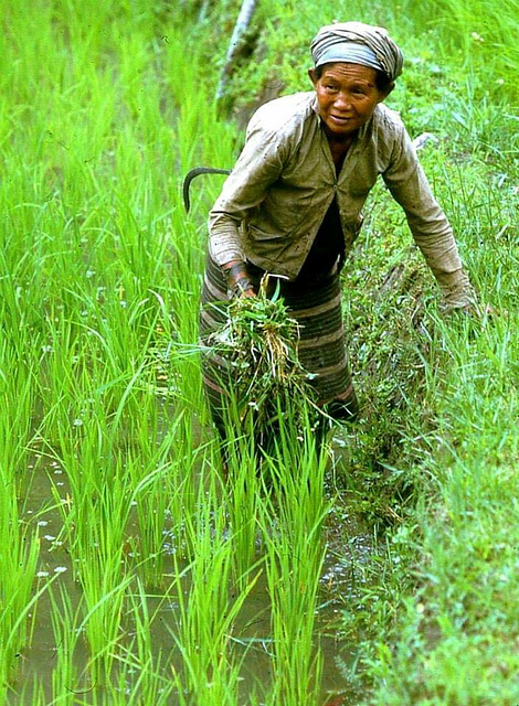 ... rizières... (2)