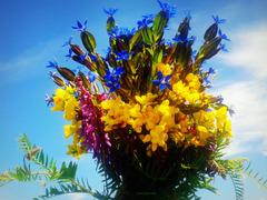 Bouquet of June field flowers
