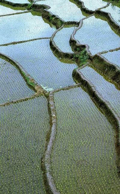 ... rizières  ... (1)