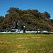 Azinheira, Quercus ilex rotundifolia, Herdade Monte Barbeiro, Alcaria Ruiva, Mértola