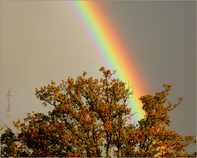 Tree of Gold under the Rainbow..