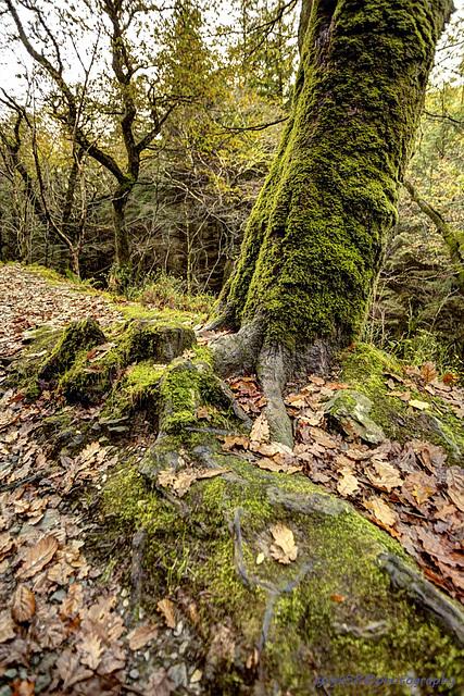 Glendalough 44