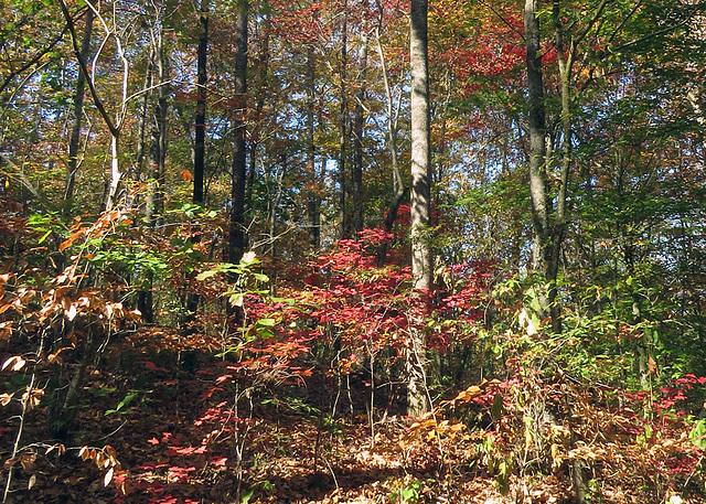 My Woods