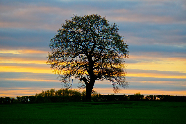 Sunset near Gnosall