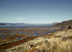 Marsh at Klamath Lake