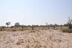 Tiel aspektas la ebenaĵoj kovrotaj de la akvo de la Okavango-Delto dum la pluva sezono