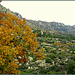 Autumn in the Sierra de La Cabrera.