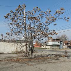 Arboriculture idea.