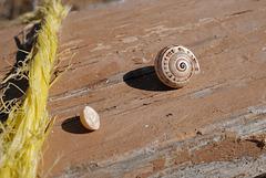 Caracolinhos, Snails