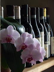 vino o fiori ?
