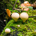 Fungi.5rjpg