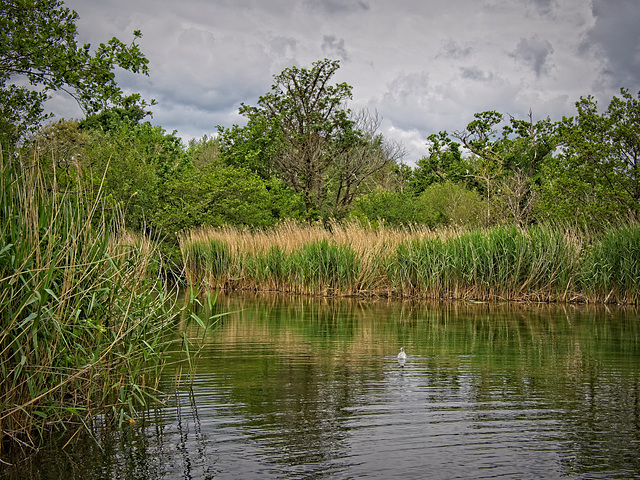Langstone Mill Pond