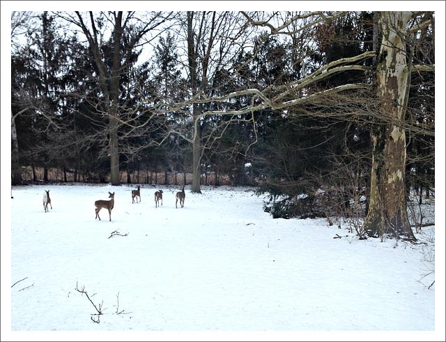 Winter survival *