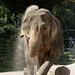 Elefantin Nanda (Zoo Karlsruhe)